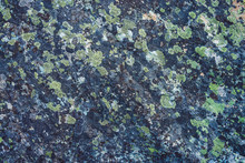 Plane Of Multicolored Boulder In Macro. Beautiful Rock Surface Close Up. Colorful Textured Stone. Amazing Detailed Background Of Highlands Boulder With Mosses And Lichens. Natural Texture Of Mountain.