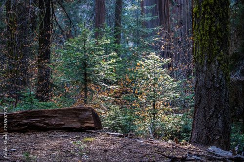 Textures in Colorful Forest with Light Through Trees