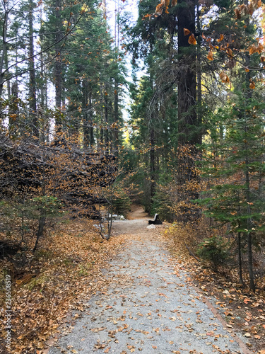 Trail through Forest with Fall Leaves with Wooden Bench in Distance