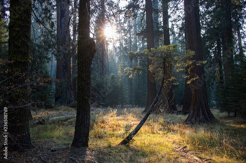 Photo  Forest Meadow at Twilight with Sun Rays Striking Single Tree