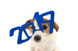 canvas print picture - 2019 NEW YEAR. FUNNY JACK RUSSELL DOG WITH A GLITTER BLUE TEXT GLASSES OR SIGN OVER ITS HEAD. ISOLATED STUDIO SHOT AGAINST WHITE BACKGROUND.