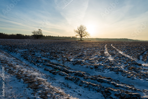 simple countryside landscape in latvia with fields and trees under snow