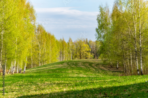Foto op Canvas Pistache plain simple countryside spring landscape with fresh green meadows and forests