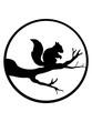 canvas print picture - rund mond kreis nacht schatten ast schwarz eichhörnchen nagetier süß niedlich sitzend comic cartoon design grauhörchen klein baum wald herbst nüsse clipart