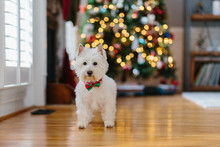 Cute White Dog Standing In Fro...