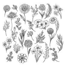 Botanical Hand Drawn Sketch. Vector Vintage Illustration Of Floral, Leaf And Herb Set Isolated On White Background