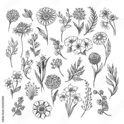 Fototapeta Botanical hand drawn sketch. Vector vintage illustration of floral, leaf and herb set isolated on white background obraz