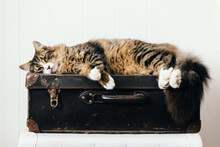 Cat Sleeping On Vintage Suitacase