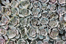 Succulents From Above