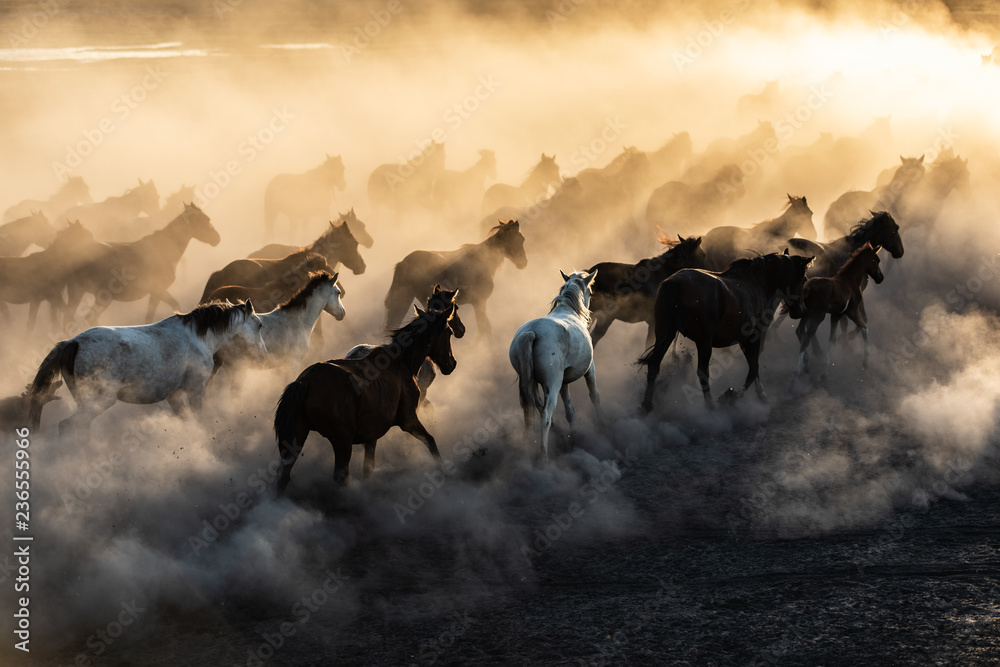 Fototapety, obrazy: yilki horses