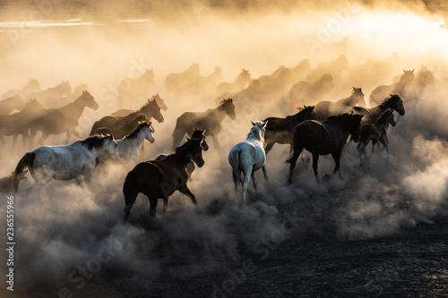 Obraz na plátně  yilki horses