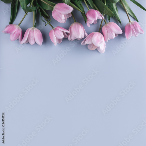 Pink tulips flowers on blue background. Waiting for spring. Happy Easter card. Flat lay, top view