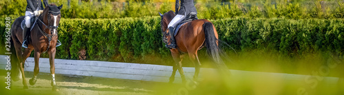 Beautiful girl on sorrel horse in jumping show, equestrian sports. Light-brown horse and girl in uniform going to jump. Horizontal web header or banner design. Copy space for your text.