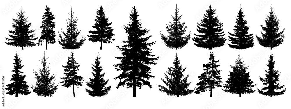 Fototapeta Forest trees set. Isolated vector silhouette. Coniferous forest. Christmas tree, fir-tree, pine, pine-tree, Scotch fir, cedar
