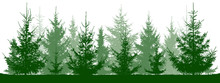 Forest Fir Trees Silhouette. Christmas Tree. Coniferous Green Spruce. Vector On White Background, Isolated Objects