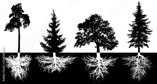 Stampa su Tela  Set of trees with roots, vector silhouette
