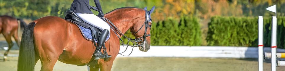 Piękna dziewczyna na szczawiu w skokach Pokaż, sporty jeździeckie. Jasnobrązowy koń i dziewczyna w mundurze skaczą. Poziomy projekt nagłówka lub banera. Skopiuj miejsce na tekst.