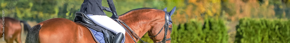 Fototapety, obrazy: Beautiful girl on sorrel horse in jumping show, equestrian sports. Light-brown horse and girl in uniform going to jump. Horizontal web header or banner design. Copy space for your text.