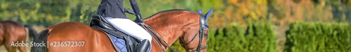 Foto op Aluminium Paardrijden Beautiful girl on sorrel horse in jumping show, equestrian sports. Light-brown horse and girl in uniform going to jump. Horizontal web header or banner design. Copy space for your text.