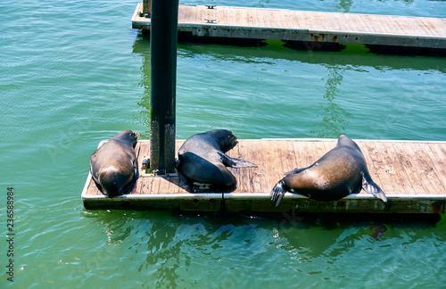 Fotobehang Amerikaanse Plekken Sea lions at Pier 39 in San Francisco, California