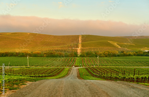 Foto op Aluminium Verenigde Staten Vineyards at sunrise in California, USA