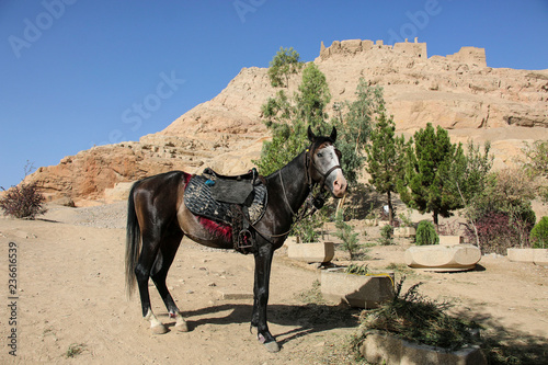 Poster de jardin Vache Horse as one of the ways to climb the hill to the ruins of the Zoroastrian temple of fire, Atashha, Isfahan, Iran