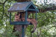 Le Chat Dans La Cabane A Oiseaux