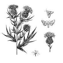 Thistle Set With Branches, Flowers And Butterflies