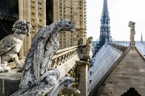 Obraz Stone statues of chimeras overlooking the rooftop and spire of Notre-Dame de Paris cathedral from the towers gallery. - fototapety do salonu