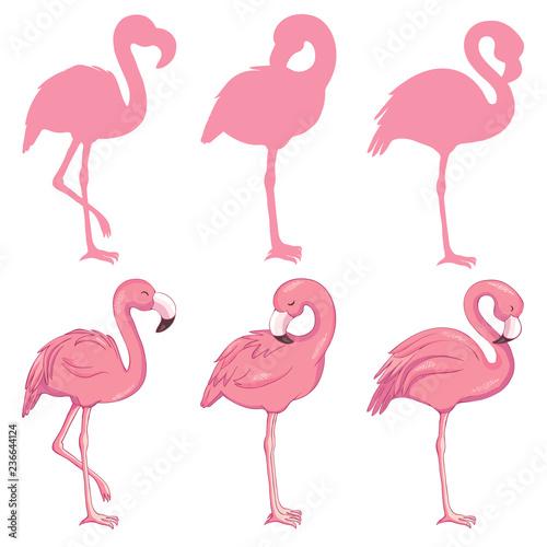 Canvas Prints Flamingo Bird Flamingo illustration, flamingo set vector