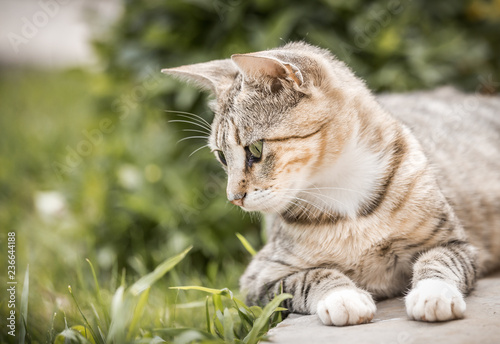 Fototapeta premium Ładny kotek domowy