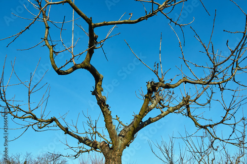 branches of a fruit tree against the sky during autumn in Poland.