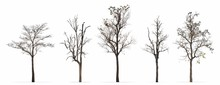 Set Of Winter Trees Leaves Less Isolated On White Background