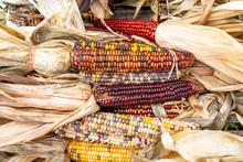 Indian Corn, Indian Summer, New England