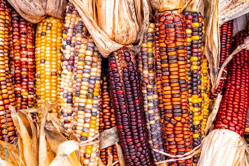 Cuadros en Lienzo Indian Corn, New England Farm