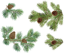 Vector Collections Of Christmas Tree Branch With Pine Cones