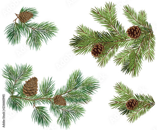 Obraz Vector collections of Christmas tree branch with pine cones - fototapety do salonu