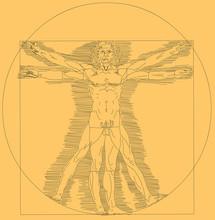 Da Vinci Human Painting Vetor