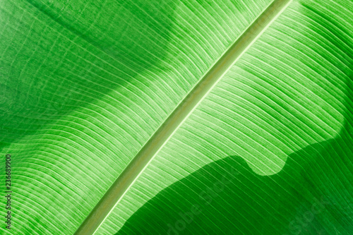 Foto  Banana green leaf texture background