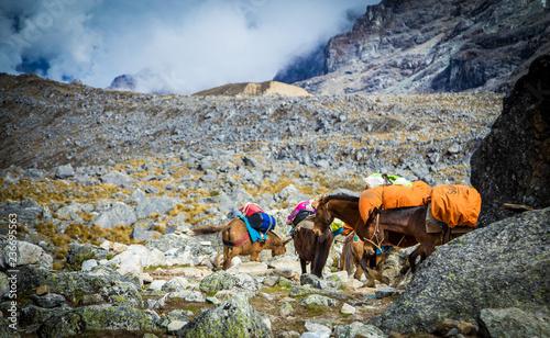 Spoed Foto op Canvas Zuid-Amerika land Horse in the mountains in Peru