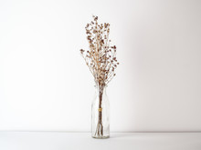 Bouquet Of Dried And Wilted Brown Gypsophila Flowers In Glass Bottle On White Floor And Background