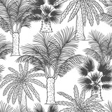 Vector seamless pattern of palmtrees. Different black white kinds of tropical palm contour sketch background monochrome isolated on white background. - 236707728
