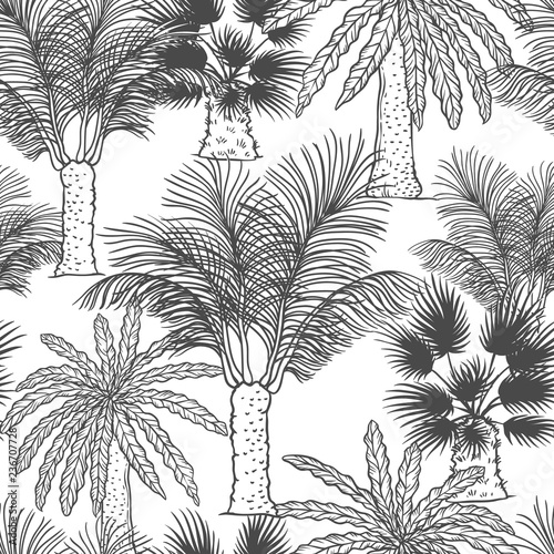 Vector seamless pattern of palmtrees. Different black white kinds of tropical palm contour sketch background monochrome isolated on white background. Wall mural
