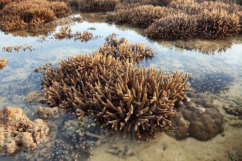 Piękna rafa koralowa podczas odpływu wody w morzu przy Phuket wyspą