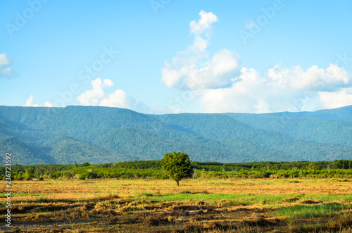 Scenic View Of Tree with Mountain background