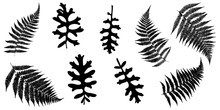 Collection. Silhouettes Of Fern Leaves And Jacobaea Maritima. Vector Illustration.
