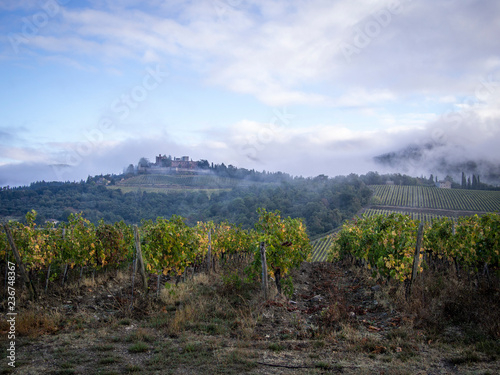 Agriculture landscape, olives and wine of Tuscany, seen from white roads in chianti