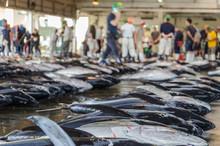 Tuna Fish On Japanese Fish Mar...