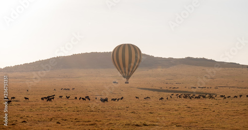 balloons flying over savanna