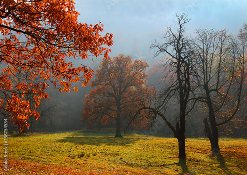 Fog between the old trees, autumn in the park castle Hukvaldy, Czech Republic